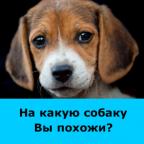 На какую собаку Вы похожи?